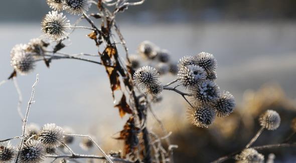 Soutien aux vignerons suite à l'épisode de gel